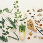 herbs for prepping 150x150 Life Saving Antibiotics with NO Prescription!