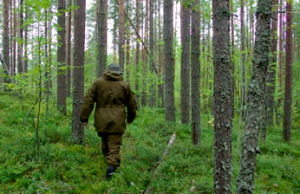 stock-footage-hiker-in-forest